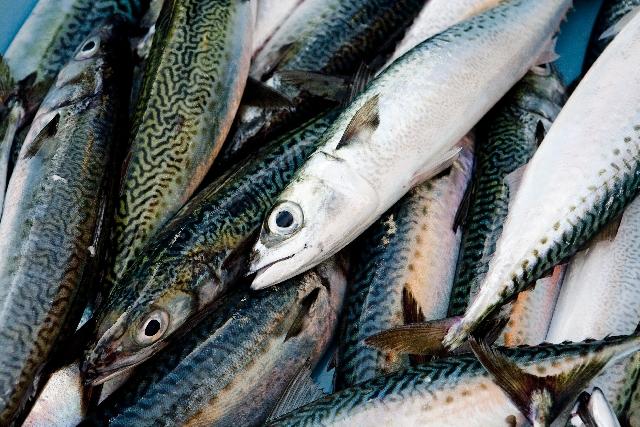 オメガ3脂肪酸をたくさん含んだ青魚