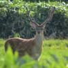 キャットフードに鹿肉!?高たんぱく、低カロリー、低脂肪、低アレルギー