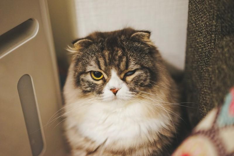 臭いうんちをしたばかりの猫