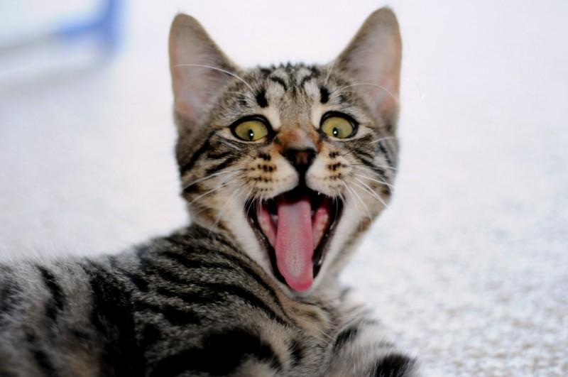 猫ちゃんの口臭