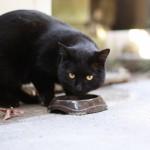 老猫に必要な1日の摂取カロリーは?年々、老猫は必要な摂取カロリーが少なくなるので給与量には注意が必要!