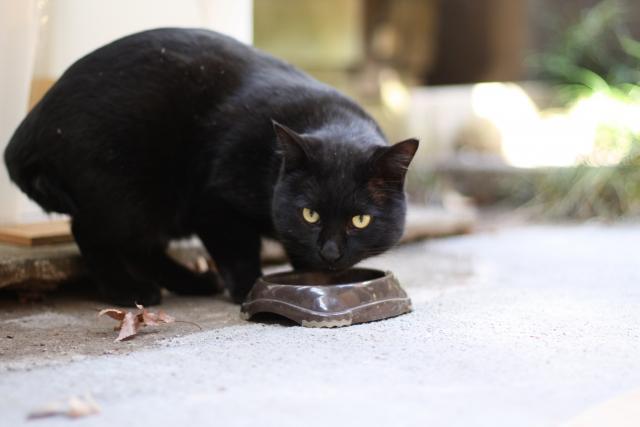 食事中の老猫