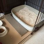 猫のおしっこが臭くて我慢できない!キャットフードを替えることで臭いは改善できるのか?