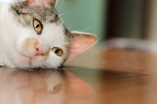 風邪を引いた猫ちゃん