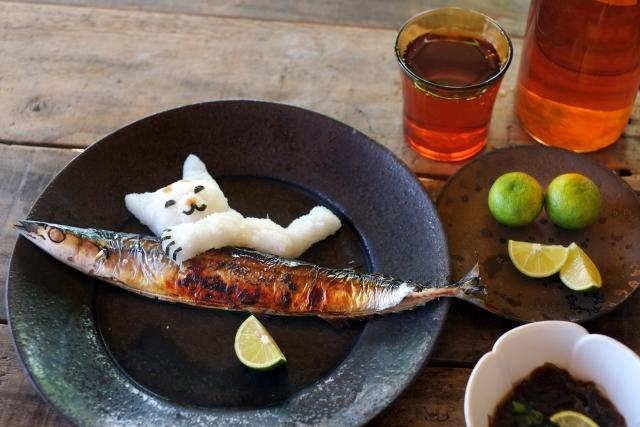 魚を使った手作りのキャットフード