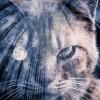 キャットフードの着色料は無意味!?猫ちゃんの目は赤色を識別できない!