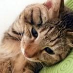 今すぐチェック!猫に多い病気「皮膚病」の原因と対策とは?皮膚病予防にはブラッシングとスキンシップがおすすめ!
