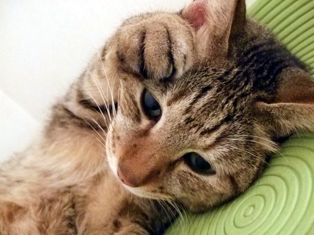 病気で体調を崩す猫ちゃん