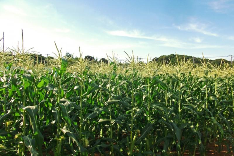 穀物 グレインフリー キャットフード