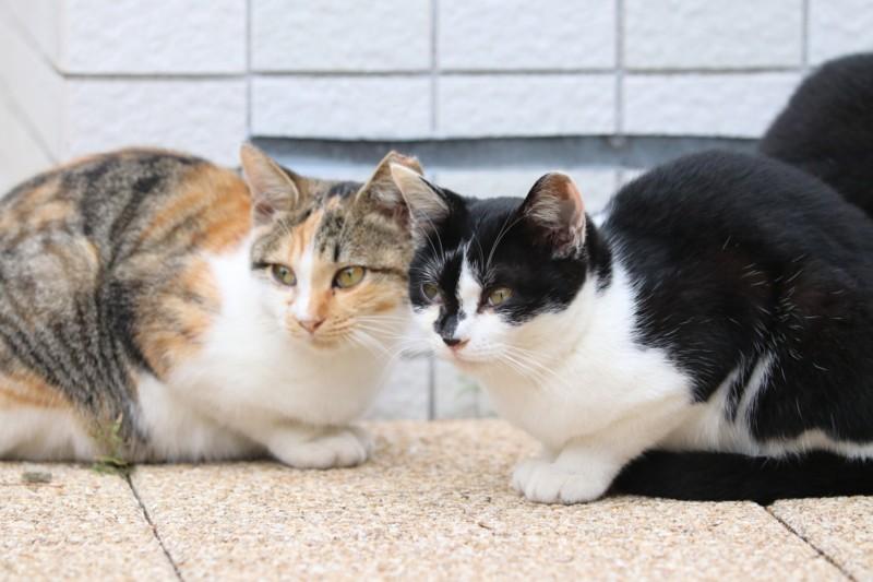 猫 グレインフリーキャットフード