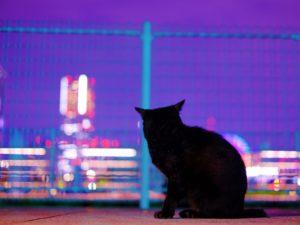 黒猫 縁起 不吉 幸運