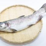 マス キャットフード 魚