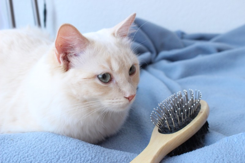 猫 ブラシ