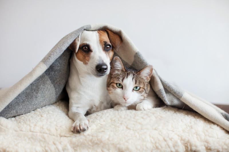 猫 犬 ハンドクリーム