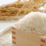 米 キャットフード 穀物