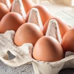 卵 全卵 キャットフード
