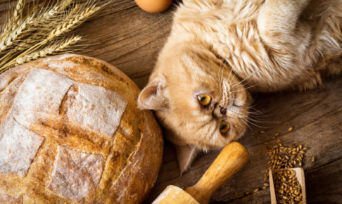 小麦 穀物 キャットフード アレルギー