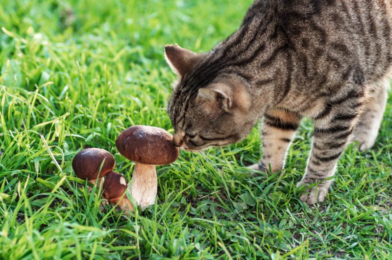 猫 きのこ キャットフード