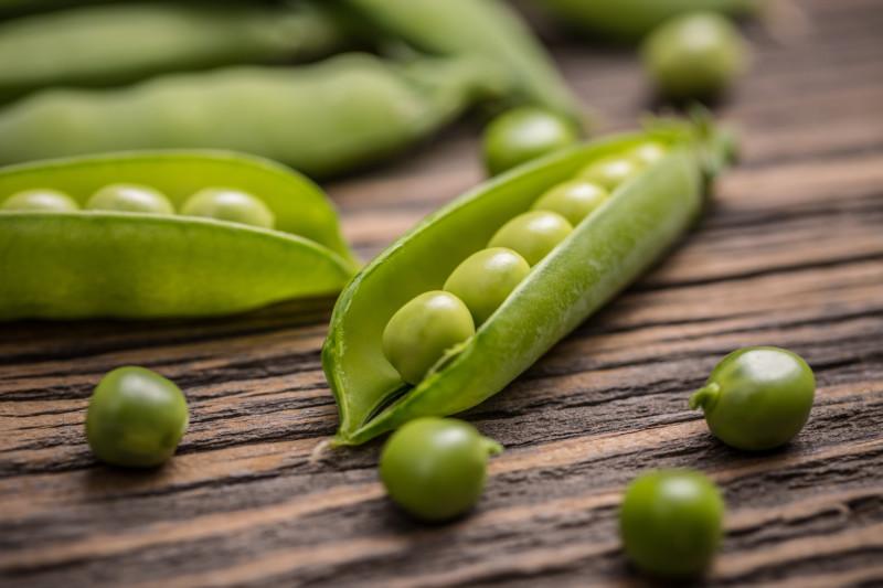 エンドウ豆 キャットフード