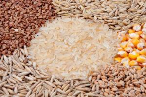 穀物 キャットフード