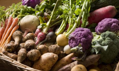 野菜 キャットフード