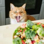 キャットフード 植物性タンパク質 動物性タンパク質