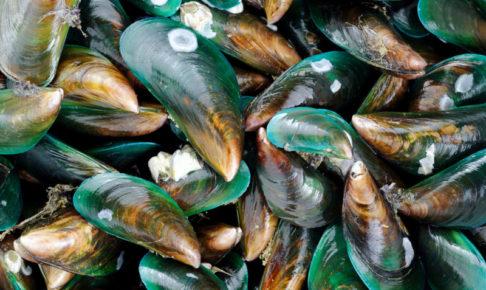 緑イ貝 キャットフード