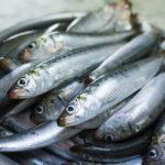 イワシ キャットフード 魚