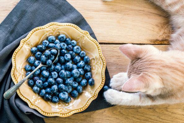 ブルーベリー 猫 キャットフード