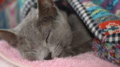 猫 ガン キャットフード
