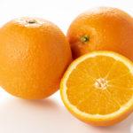 オレンジ キャットフード 猫
