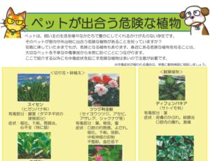 ペット 危険 植物 ブルーベリー 猫