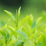 緑茶 キャットフード