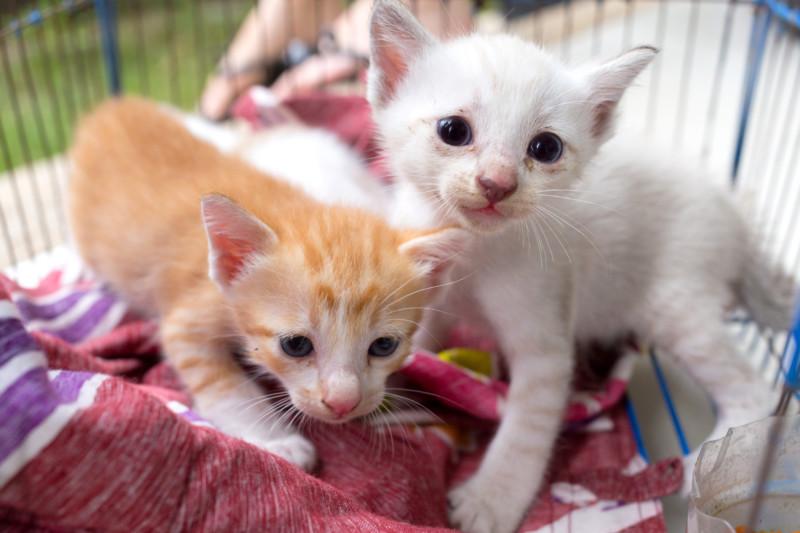 猫 動物愛護法 改正 2019年