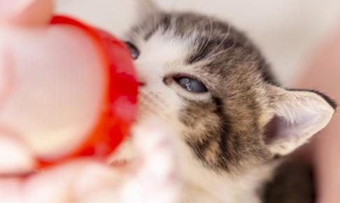子猫 ミルク おすすめ