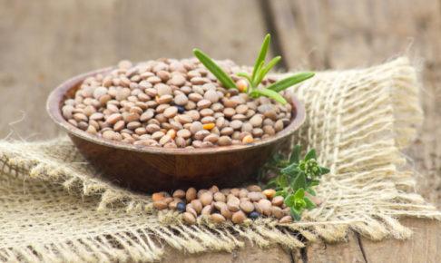 キャットフード レンズ豆
