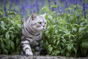 猫 花粉症