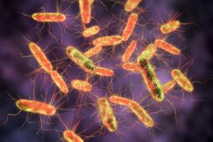 キャットフード サルモネラ菌 リコール