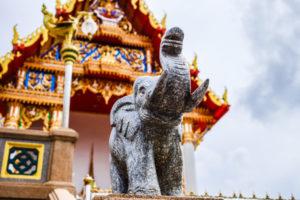 タイ キャットフード