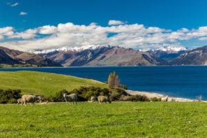 キャットフード ニュージーランド