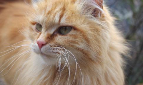 猫 毛並み 毛艶