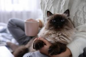 猫 飼いやすい 種類