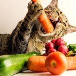 猫 ビタミンA βカロテン