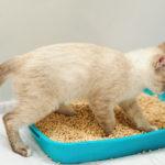 猫 下部尿路疾患 FLUTD