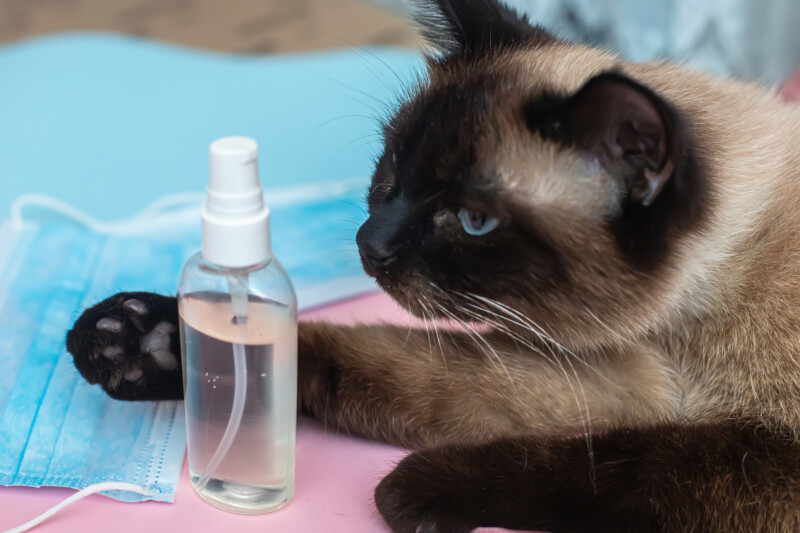 猫 アルコール 除菌