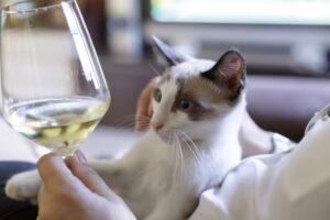 猫 アルコール