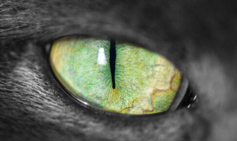 猫 目 色