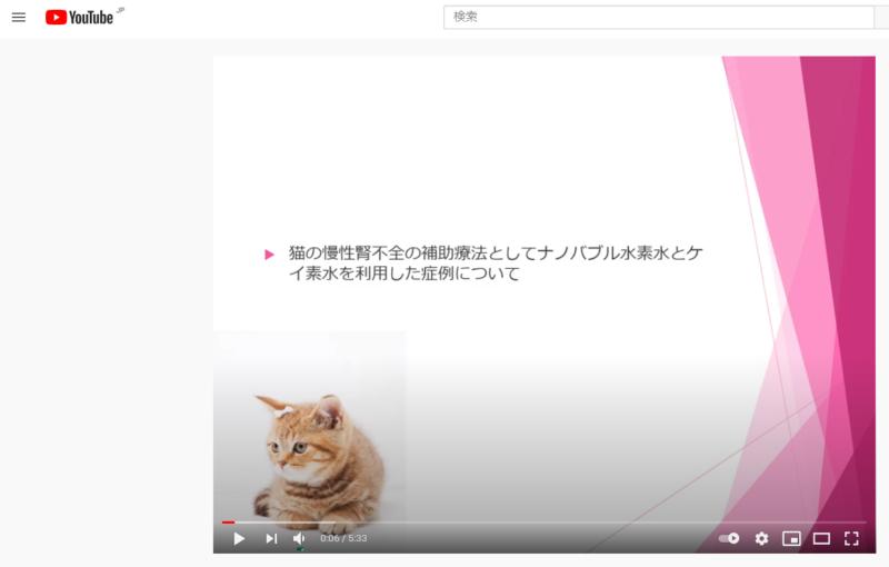 猫 慢性腎不全  ケイ素