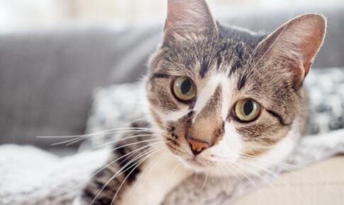 猫 腎臓病 AIM