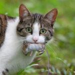 キャットフード ネズミ 培養肉